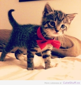 kitten_With_a_bowtie
